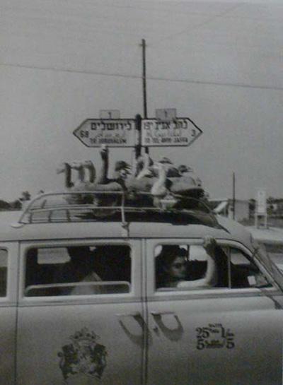 ורנר בראון - מצעד האווזים, 1955
